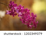 close up  thai  orchid in... | Shutterstock . vector #1202349379