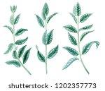 herbs. botanical watercolor.... | Shutterstock . vector #1202357773