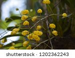 yellow orchid. gorgeous | Shutterstock . vector #1202362243