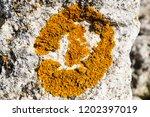 lichen close up | Shutterstock . vector #1202397019
