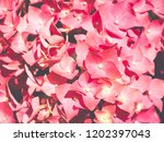 red flowers  close up | Shutterstock . vector #1202397043