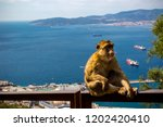 the famous apes of gibraltar ... | Shutterstock . vector #1202420410