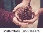 couple of hands taking a pine...   Shutterstock . vector #1202461576