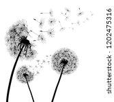 abstract black dandelion ... | Shutterstock .eps vector #1202475316