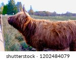 highland cow spotted in... | Shutterstock . vector #1202484079