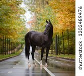 Black Horse Stands In Nature O...