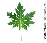 papaya leaves background for... | Shutterstock .eps vector #1202505676