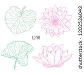 decorative lotus  flowers set ... | Shutterstock .eps vector #1202526043