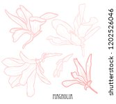 decorative magnolia flowers set ... | Shutterstock .eps vector #1202526046