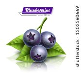 blueberries with a petal.... | Shutterstock .eps vector #1202560669