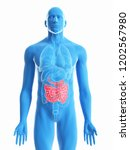 3d rendered medically accurate...   Shutterstock . vector #1202567980