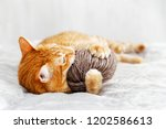 Stock photo orange cat playing with a ball of yarn lying on the bed shallow focus blurred background 1202586613