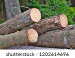 timber ready for transport ... | Shutterstock . vector #1202614696