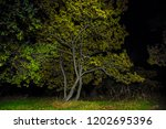 alone tree on a forest glade at ... | Shutterstock . vector #1202695396