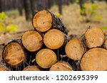 closeup heap of pine tree trunk ... | Shutterstock . vector #1202695399