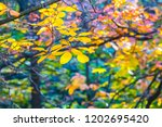 beautiful varicoloured autumn... | Shutterstock . vector #1202695420