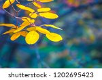 closeup yellow tree branch in a ... | Shutterstock . vector #1202695423