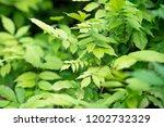 fresh new green leaves... | Shutterstock . vector #1202732329