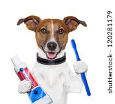 Stock photo teeth cleaning dog with toothpaste and toothbrush 120281179