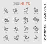 vector icon and logo for nuts... | Shutterstock .eps vector #1202909476