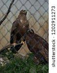 24 sep 2009 eagle in pt. g.b.... | Shutterstock . vector #1202911273