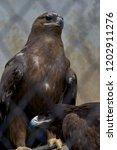 24 sep 2009 eagle in pt. g.b.... | Shutterstock . vector #1202911276