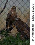 24 sep 2009 eagle in pt. g.b.... | Shutterstock . vector #1202911279