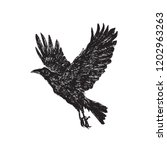 Crow Flying  Hand Drawn Doodle...