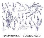 Black Line Lavender. Vector...