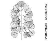 silver dollar eucalyptus leaves.... | Shutterstock .eps vector #1203036259