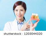 woman dentist show implant...   Shutterstock . vector #1203044320