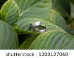 Svatebn  Prsteny Na Listu