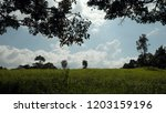 trees in green field with blue... | Shutterstock . vector #1203159196