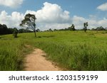 trees in green field with blue... | Shutterstock . vector #1203159199