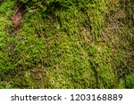 Moss In The Alpine Forest...