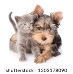 Stock photo yorkshire terrier hugging little kitten and looking at camera isolated on white background 1203178090