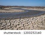 cracked soil in field   Shutterstock . vector #1203252160