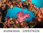 Framed Pink Soft Coral ...