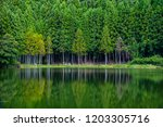 mysterious pond and specular... | Shutterstock . vector #1203305716