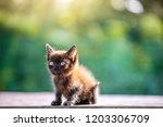 dark little kitten in the... | Shutterstock . vector #1203306709