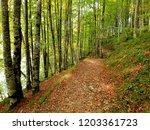 Stock photo irati jungle forest 1203361723