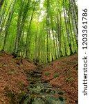 Stock photo irati jungle forest 1203361786