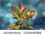 beautiful green succulent pant... | Shutterstock . vector #1203440986