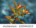 beautiful green succulent pant... | Shutterstock . vector #1203441013