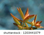 beautiful green succulent pant... | Shutterstock . vector #1203441079