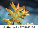 beautiful green succulent pant... | Shutterstock . vector #1203441190
