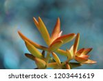 beautiful green succulent pant... | Shutterstock . vector #1203441619