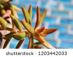 beautiful green succulent pant... | Shutterstock . vector #1203442033