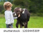 boy and calf on the field ... | Shutterstock . vector #1203445309
