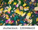 Colorful Autumn Leaves In The...